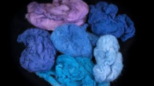 Wool dyed in various colors extracted from the Murex trunculus snail. (Moshe Cain)